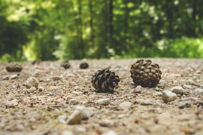 depth of field fir cone forest gravel